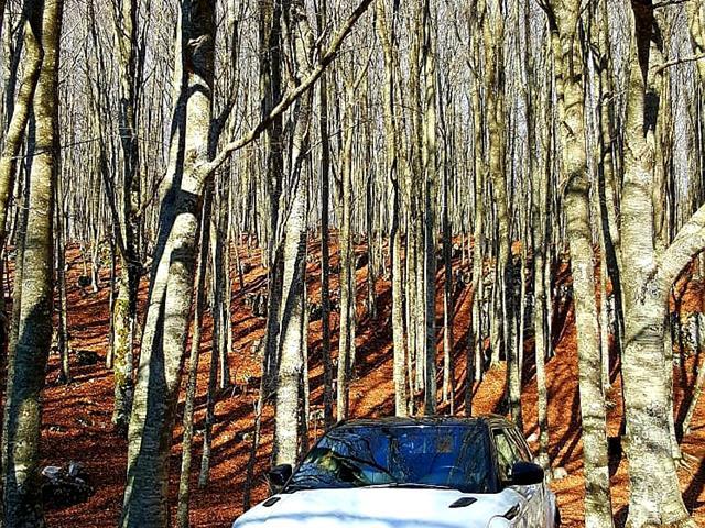 LAND ROVER RANGE ROVER EVOQUE Range Rover Evoque 2.0 TD4 150 CV 5p. SE Dynamic